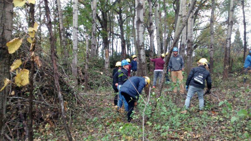 People with hard hats clean up wooded area