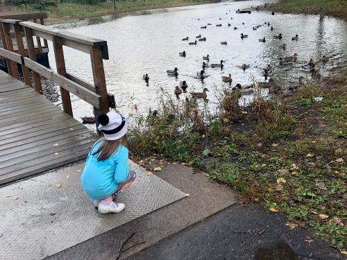 Girls watches duck in pond
